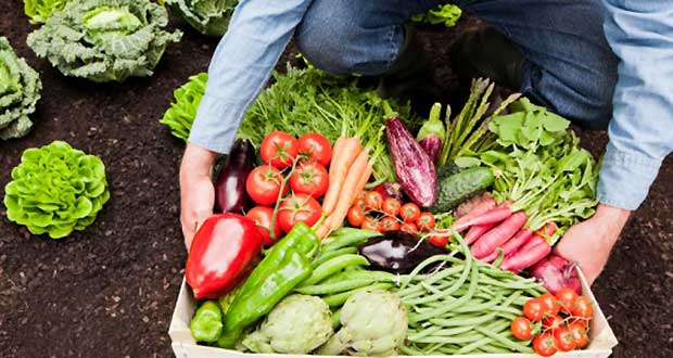 Easiest-Vegetables-to-Grow-at-Home